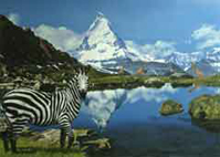 Zebra. Giraffes and Zebra in Front of the Mountain Matterhorn in Switzerland. Oil on Canvas, Artist Chris Staebler.